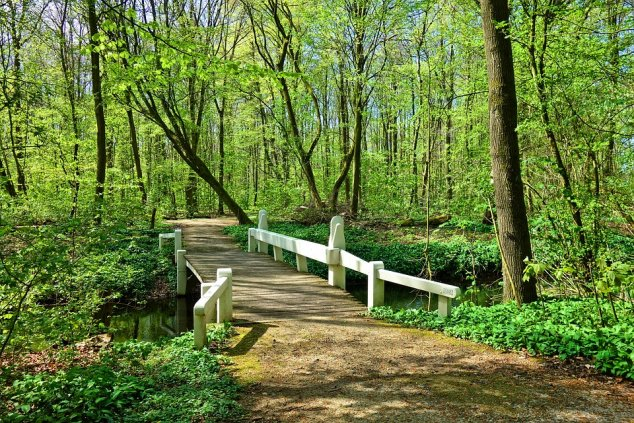 Footbridge through woods